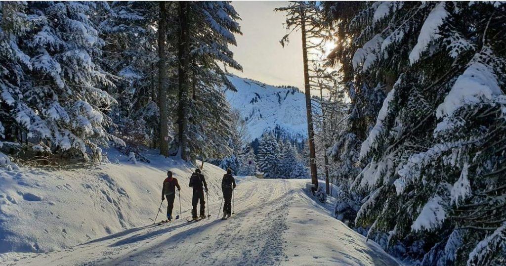 3 people ski touring in a snowy forest